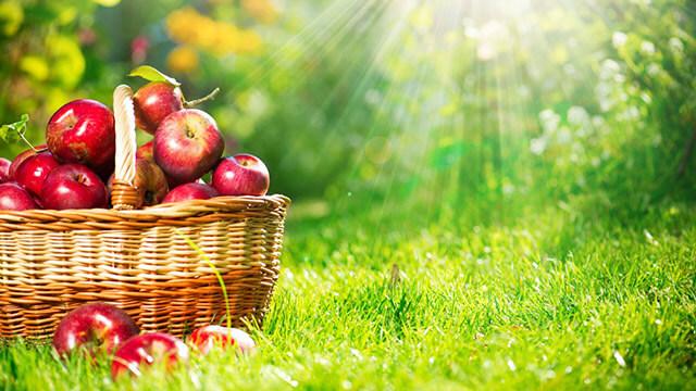 elma tüketimiyle daha sağlıklı bir yaşam